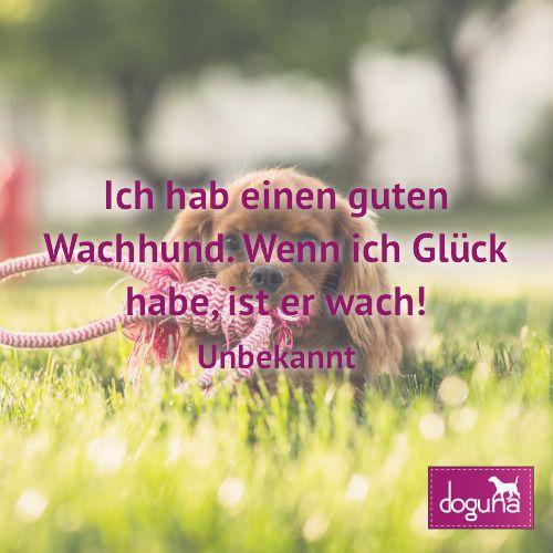 Ich hab einen guten Wachhund. Wenn ich Glück habe ist er wach! (Unbekannt) #hund #hunde #dog #dogs #dogsofinstagram #love #beautiful #instadog #ilovemydog #doglover #dogoftheday #doggy #dogstagram #hamburg #germany #deutschland #weisheiten #lovedogs #doglove #zitate #fb