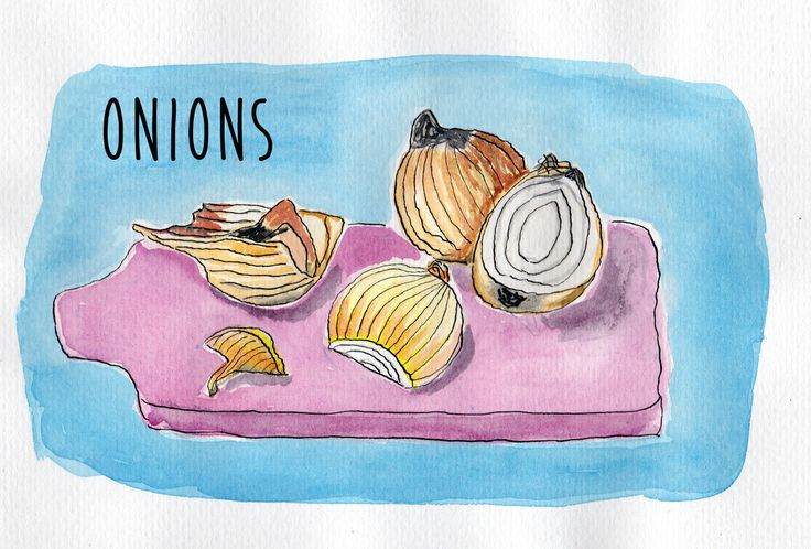 Romanian onions in watercolor and ink.