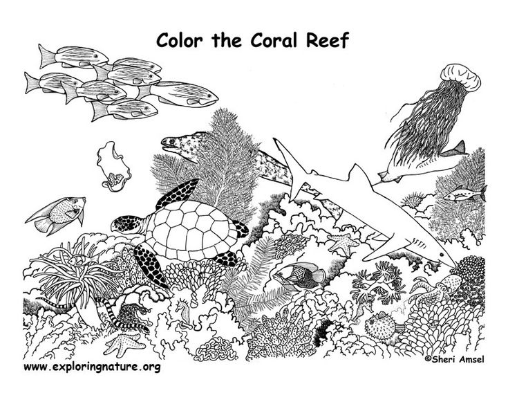 Coloring Pages Of Aquatic Animals : 7 best coral reef coloring pages images on pinterest