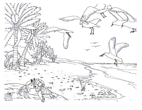 Woods Landscape Coloring Page Coloring Pages