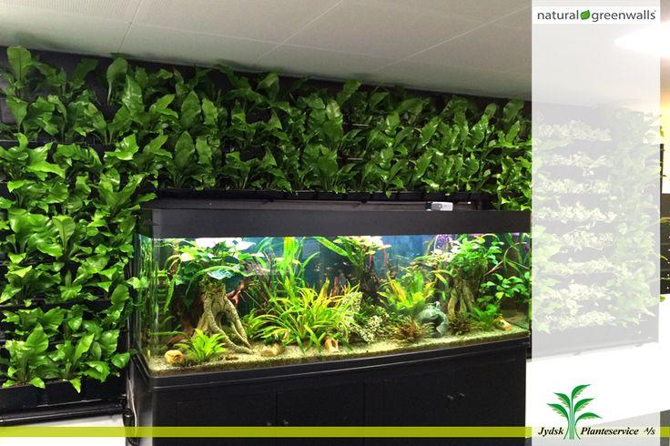Inspirerende og dejligt arbejdsmiljø... Plantevæg med  indbygget akvarie. #Plantevæg