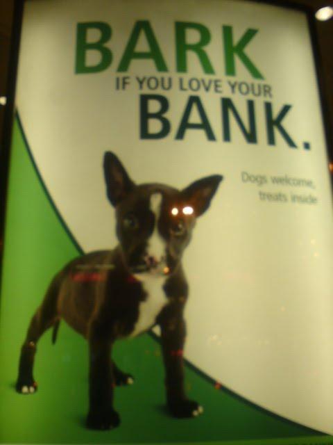 TD Bank pet friendly -