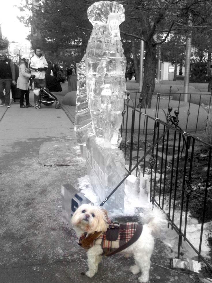Billy and the Yorkville Ice Sculpture.