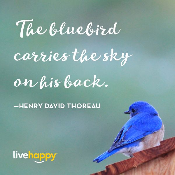 Live Happy Quotes | Henry David Thoreau                                                                                                                                                                                 More