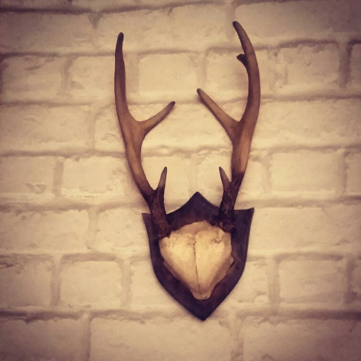 Stag antlers on white brick wall