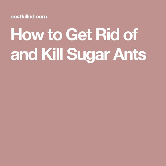 How to Get Rid of and Kill Sugar Ants