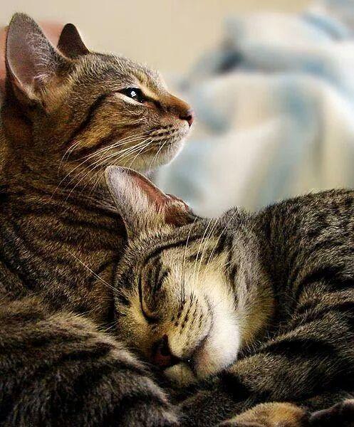 Best friends!cats, tabby cat, striped cat, friendship