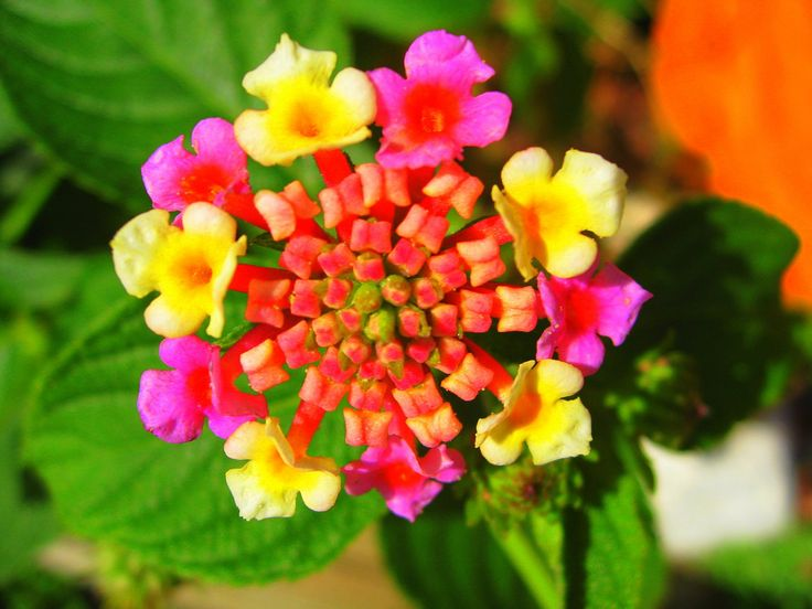 best what flower is this? images on, Beautiful flower