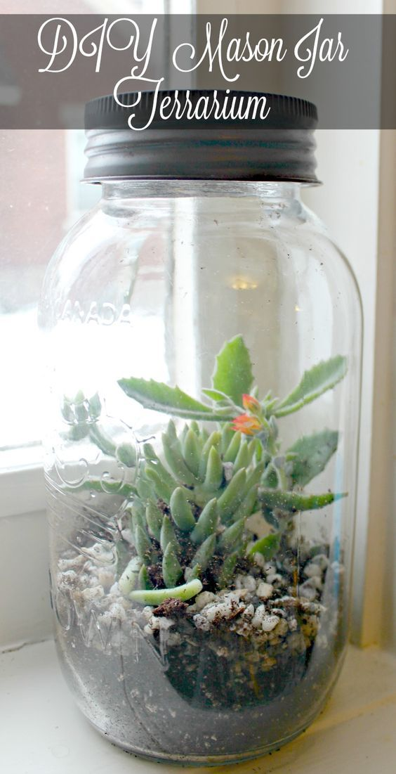 One mason jar, a handful of potting soil and some small houseplants make a diy mason jar terrarium to brighten your windowsill all winter long.: