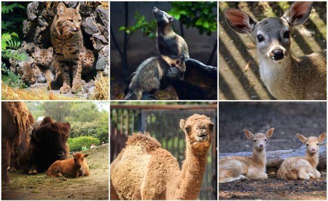 Nacen 219 crías en zoológicos del DF en este año | El Universal
