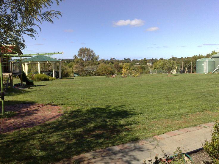 A rare site...green green grass of home