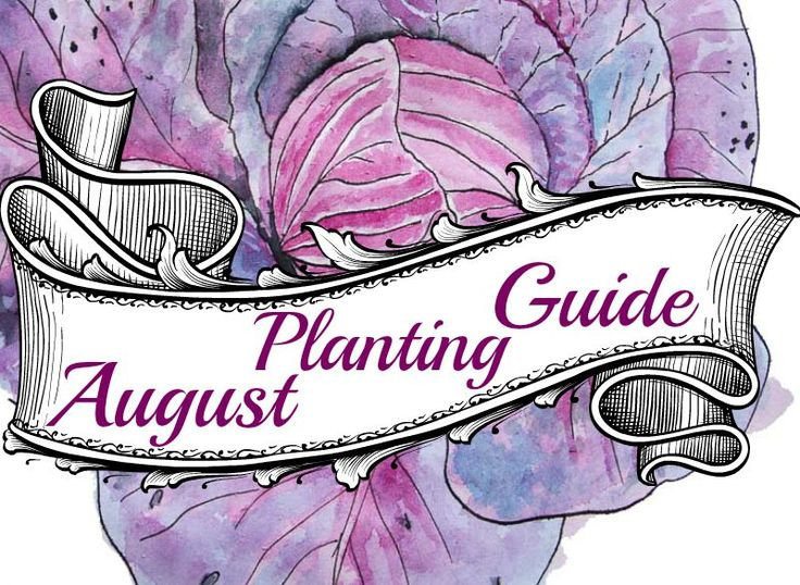 Download your FREE copy of this months Veggie Planting Guide for Australian gardeners. Covers all regions . . .