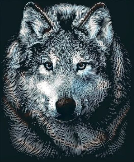 1000 ideas about wolf face drawing on pinterest wolf. Black Bedroom Furniture Sets. Home Design Ideas