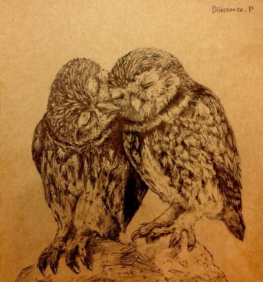 #draw #drawing #art #illustration #picture #Owl #love