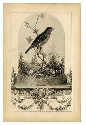 Vintage Printable - Breathtakingly Beautiful Bird in Cloche: Tags, Vintage Printables, Art, Vintage Birds, Graphicfairi, Lilacs, Free Printables, Crafts, Graphics Fairies