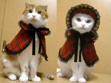 Gatitos disfrazados!!!! - Taringa!