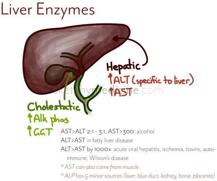 http://liverbasics.com/liver-enzymes.html Liver enzymes talked about in a nutshell. The most important ones to be familiar with.
