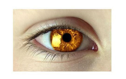 Golden eyes, irises like the sun.