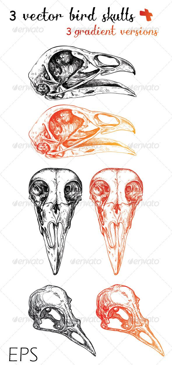 3 Vector Bird Skulls + 3 Gradient Versions Ink
