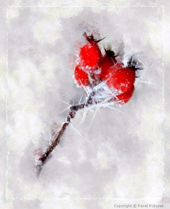 Frozen rosehips
