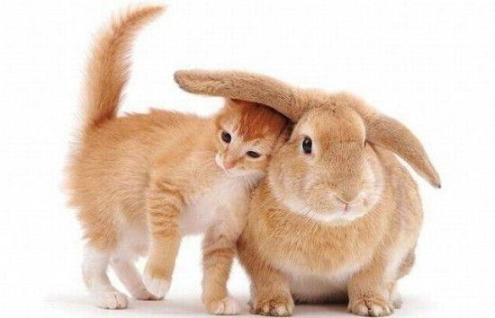 10 Χαριτωμένα Γατάκια (Φωτογραφικό Αφιέρωμα – Μέρος 3ο)