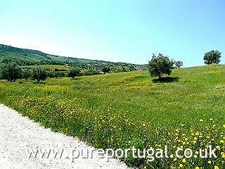 Property for Sale in Santarem, Portugal: 8,320m2 plot with permission to build up to 300m2 house.