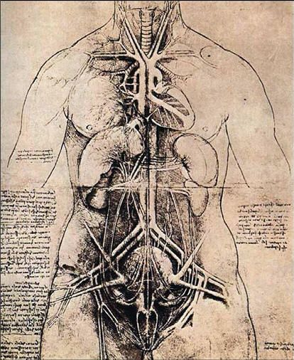 Vista Art Projects: Leonardo da Vinci Anatomy Drawings