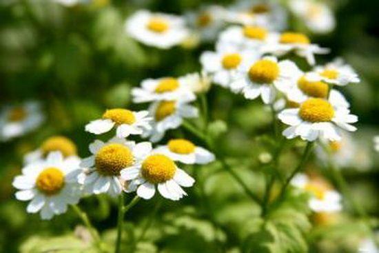 травы помогут поднять иммунитет