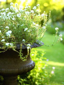 #sommer #pflanze #summer #plant #pflanzenfreude
