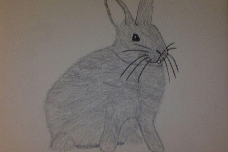 Le petit lapin angora tout mignon.
