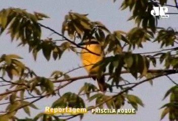 #Birdwatching: conheça a técnica da observação de pássaros http://mais.uol.com.br/view/85r7d735pwrw/birdwatching-conheca-a-tecnica-da-observacao-de-passaros-0402356CCCC92346?types=A  --> Venha observar aves no Portal da Terra <--