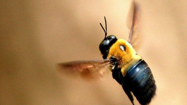 Come prevenire e curare le punture di api e vespe