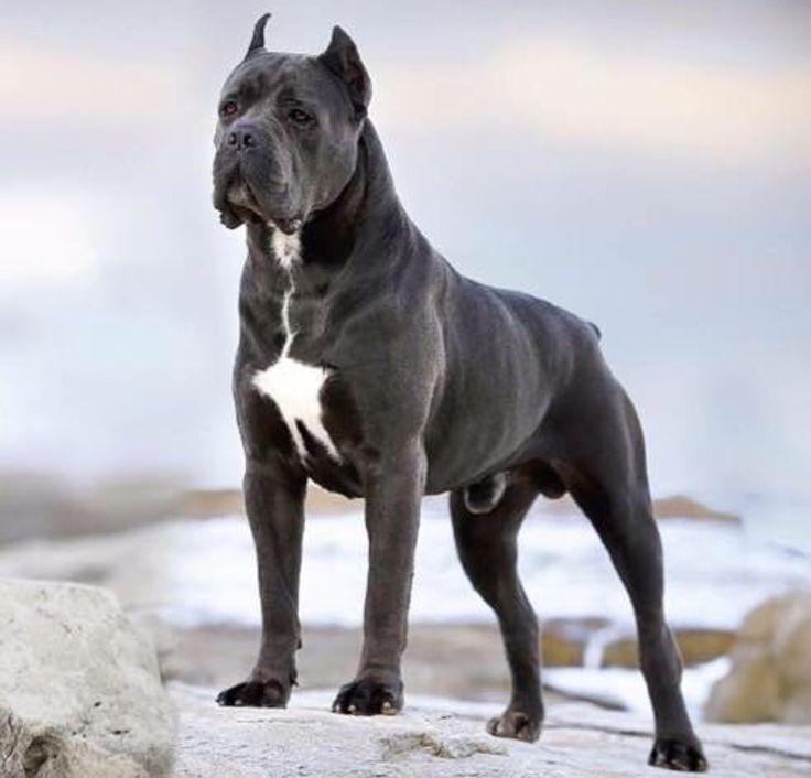 Big Italian Dog Names