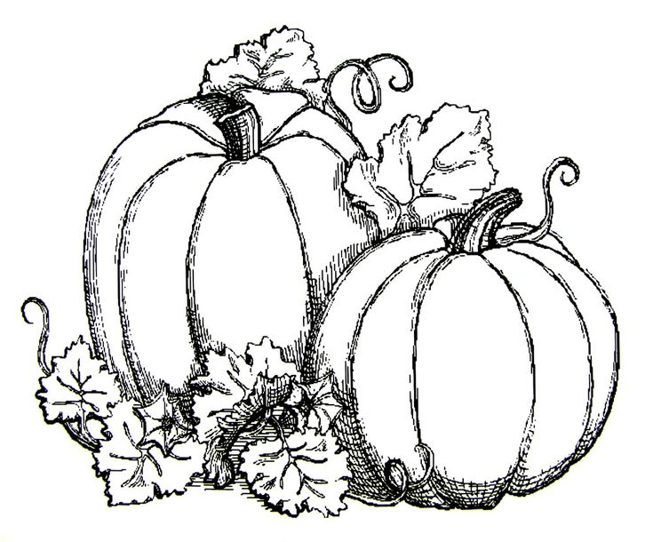 Pumpkins Adults And Teens Coloring Pages