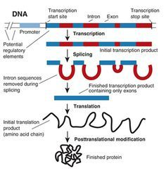 what does gene expression mean in biology