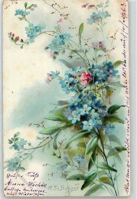 Vergissmeinnicht Blumen: Ansichtskarten-Center Onlineshop