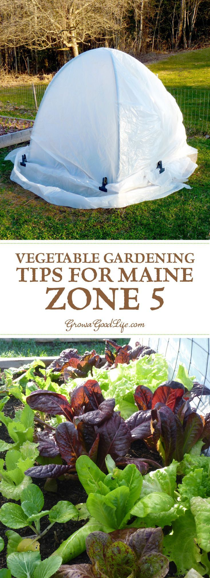 Even when faced with a short growing season, a lot can be harvested with some experimentation and careful planning. Make the most of your vegetable garden by exploring creative ways to extend the season, select crops with a short maturity date, and try to keep the beds producing by succession planting.