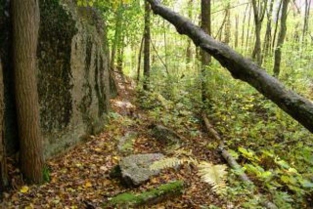 forest path - Google Search