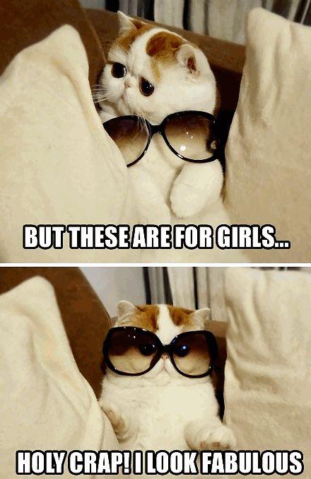 Girl Glasses OMG I look Fabulous   Funny Cat with Glasses Frames Online ◬