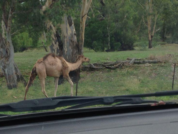 On the river at Bingara NSW.
