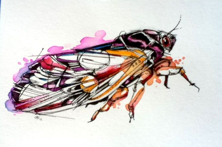 Periodical Cicada by FinchFight.deviantart.com on @deviantART LOVE LOVE LOVE