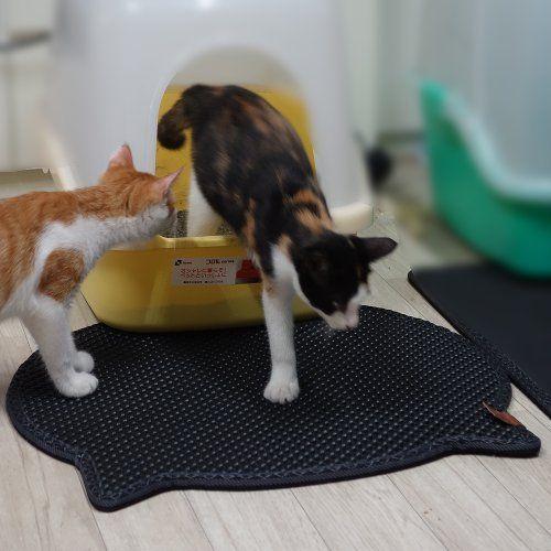 25 Best Ideas About Cat Litter Mat On Pinterest Cat Box