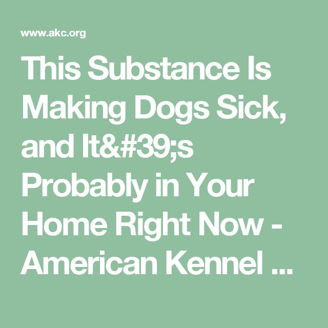 This Substance Is Making Dogs Sick, and It's Probably in Your Home Right Now - American Kennel Club