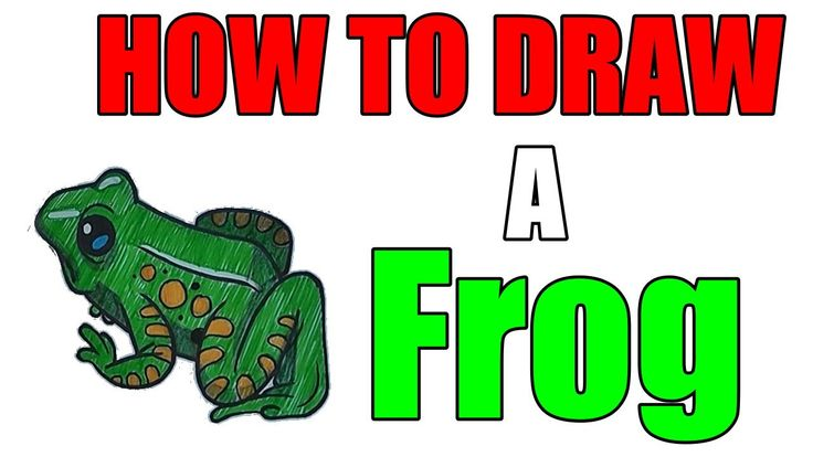 How to Draw a Frog - Step By Step For Beginners