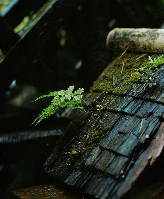 """valscrapbook: """"untitled by kureyuzu on Flickr. """""""
