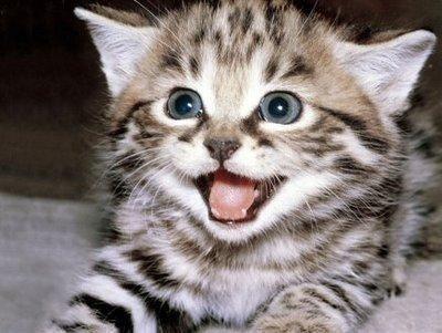 Cómo premiar a mi gato. Cuando estás en pleno proceso de adiestramiento de tu gato, para que no arañe los muebles, no rompa telas, acepte a otra mascota... debes tener un gesto que el animal entienda como premio, de modo que...