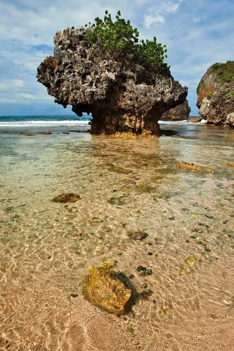 Pantai Siung : Tepus, Gunungkidul, Yogyakarta  Koordinat GPS: S08 10 54.7 E110 40 58.5  Foto: Soga Soegiarto New