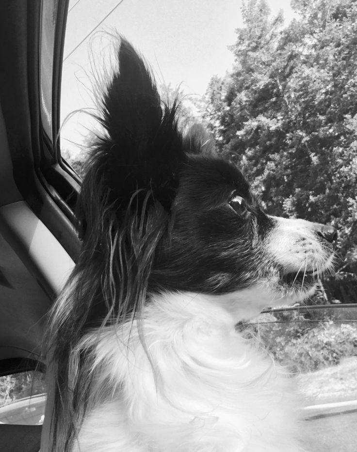Radar ❤ Nothing beats gettin' sniffs through the car window