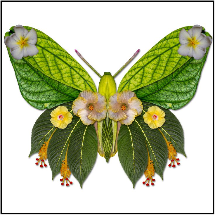 Tropical flower butterfly, flower collage art, Susan Cleaver, Artist, digital photo art and more, experiencing the visual element of nature through photography