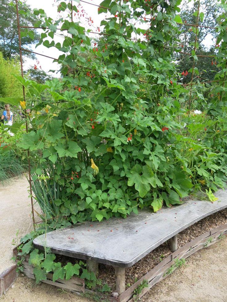 Spalje för prydnadspumpor och bönor bakom en bänk